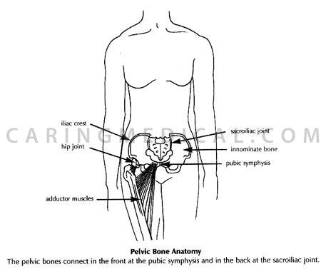pubic symphysis injury