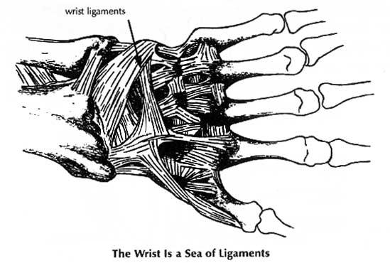 wrist.ligaments