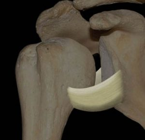 inferior glenohumeral ligament