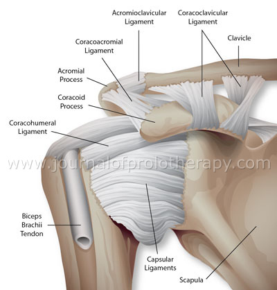Some of the ligaments and connective tissue of the shoulder. Typically Slap tears are not a problem by itself, it can involve any or many of the support tissue of the shoulder capsule.