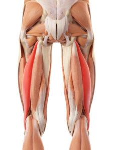 Hamstring Injuries – Caring Medical