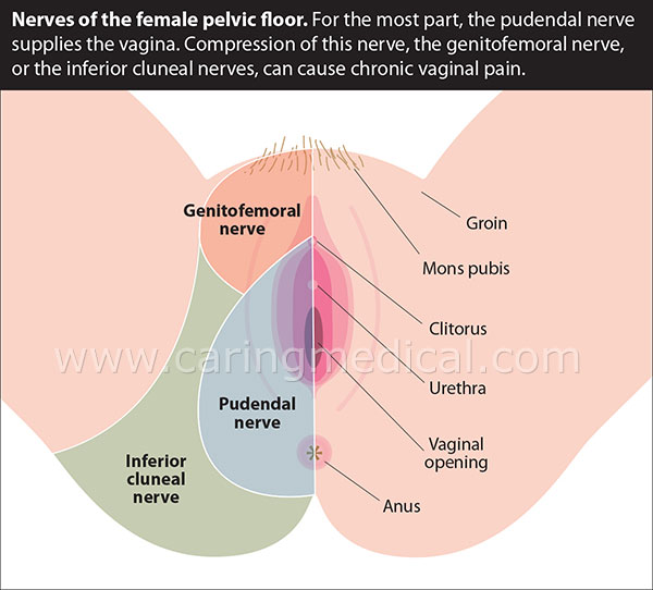 female pelvic floor- nerves