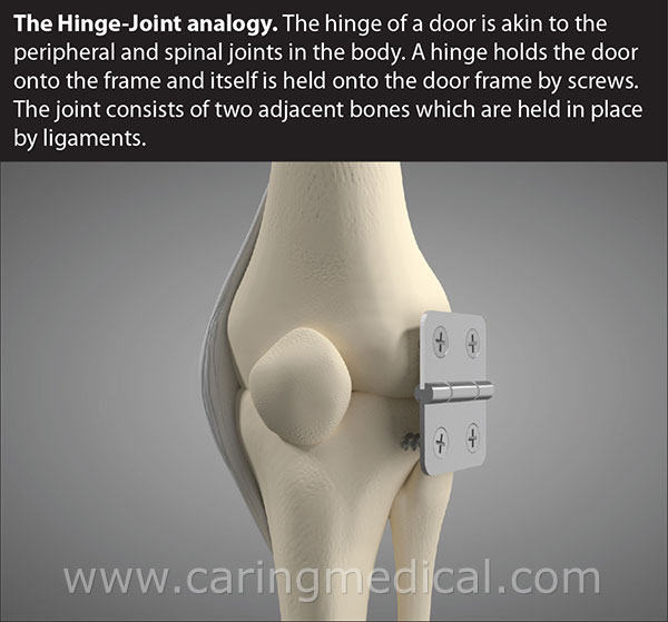 hinge joint analogy