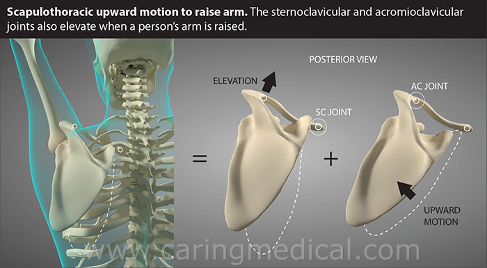 scapulothoracic upward motion