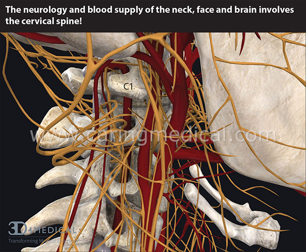 The cervical spine is intertwined with nerves and blood vessels. Cervical spine instability can compress or pinch the nerves and arteries causing a myriad of symptoms depending on how the patients moves his/her head.