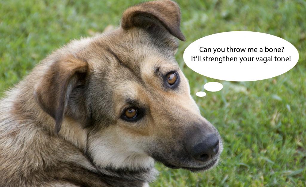 Dog vagal tone