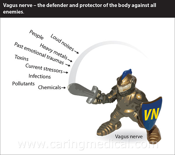Vagus nerve - the defender and protector of the body against all enemies